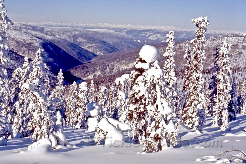 Winter Scene on Clinton Creek Road near Government Camp