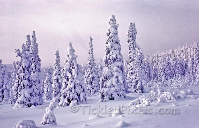 Snowy Scene on Clinton Creek Road