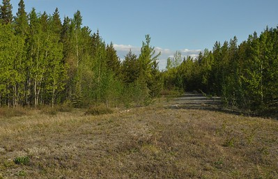 Abandoned Section of Alaska Hwy