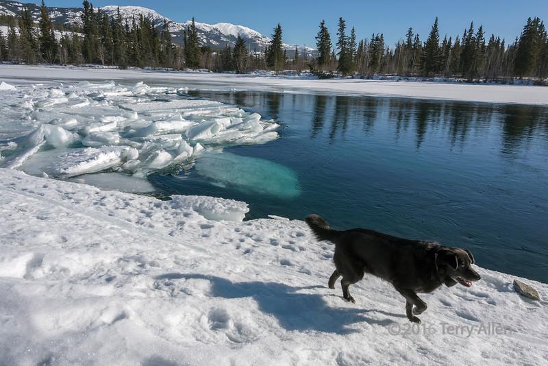Ice breakup with dog