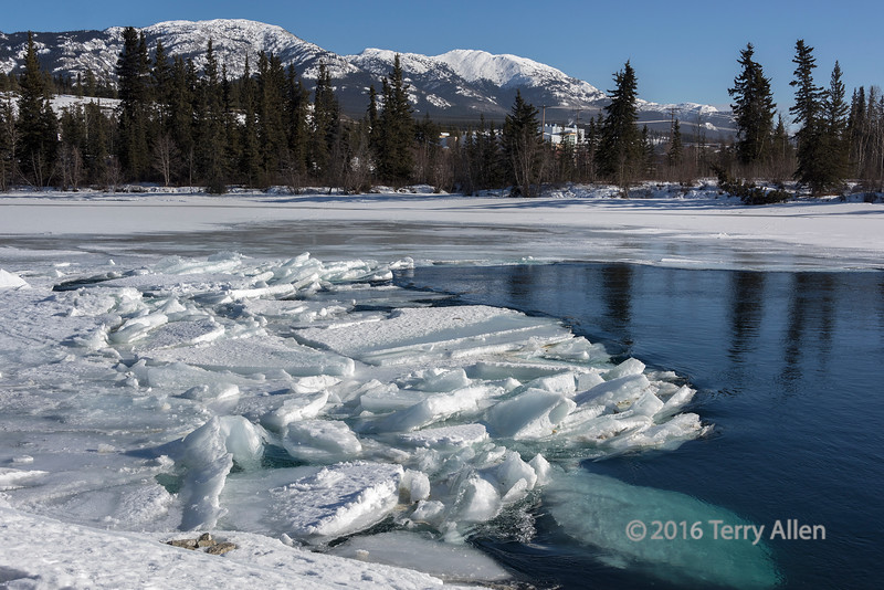 Early ice breakup on the Yukon River, Whitehorse, Yukon Territories