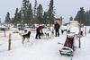 Ready for dog sledding?