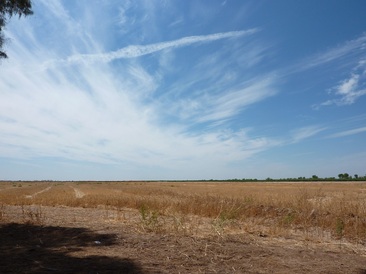 Cut grain field near the Arizona-Mexico border.