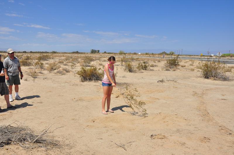 Nicole Blending Soil