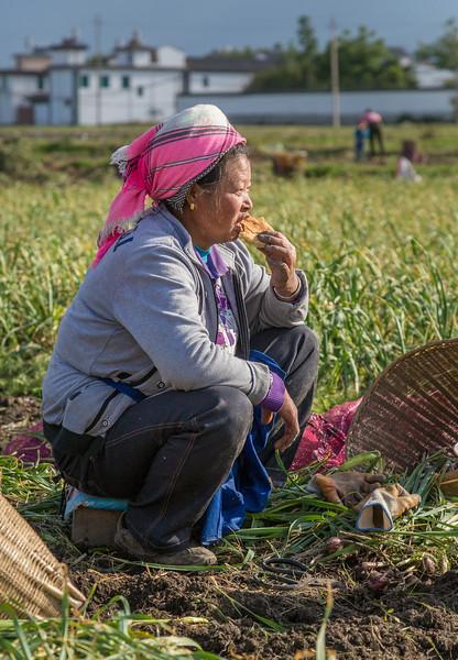 Xizhou, China: a garlic harvestor takes a break, with Xizhou residences in the background