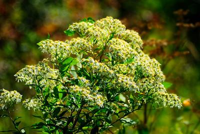 fleurs_DSC0024.jpg