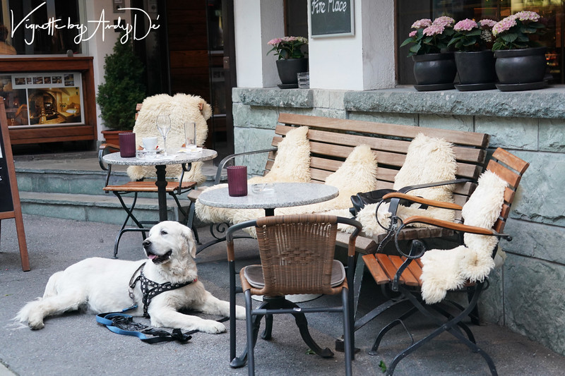 "Zermatt is ""the place to chill and relax"" before embarking on the hard work of hiking, trekking, or climbing the Matterhorn - the chillaxed spirit has not been lost on our adorable canine friend who appears to be taking a cue from his masters!"