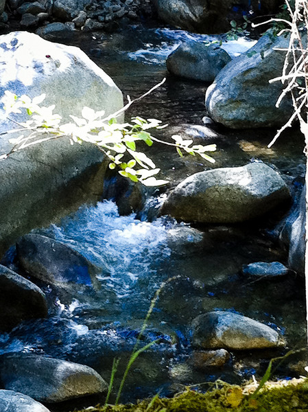 Close-up of the creek