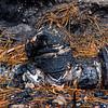 BRAD McDONALD AUSTRALIAN BUSH FIRE AFTERMATH 2020011700030
