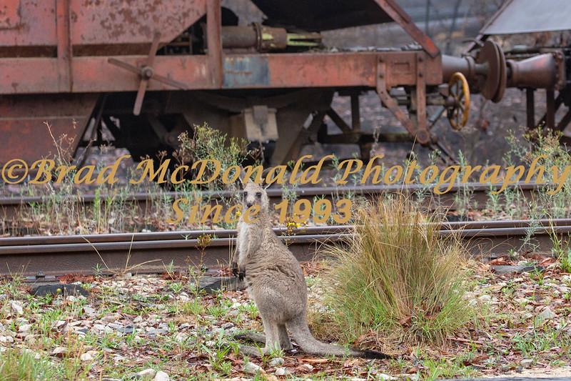 BRAD McDONALD AUSTRALIAN BUSH FIRE AFTERMATH 2020011700001