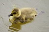 Friday, May 6, 2011 - The Columbus Zoo and Aquarium
