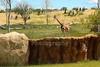 The Columbus Zoo and Aquarium featuring the one day old Heart of Africa exhibit - Friday, May 24, 2014