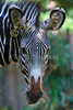 Sunday, August 12, 2012 - The National Zoo is part of the Smithsonian Institution and located in Washington DC.