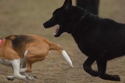 Setkání psů