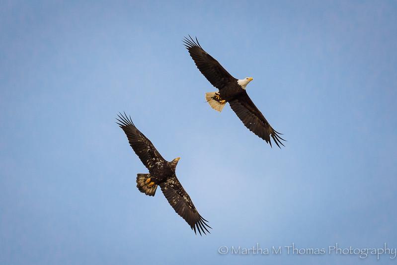 Eagles together
