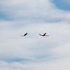 4-h pic sale air planes 249