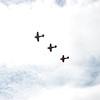 4-h pic sale air planes 240
