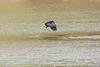 Fish_Eagle_Kaingo_Zambia__0014
