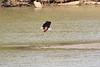 Fish_Eagle_Kaingo_Zambia__0016