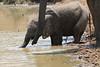 Elephant_Mwamba_Hide_Zambia0050