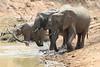 Elephant_Mwamba_Hide_Zambia0030