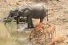 Elephant_Mwamba_Hide_Zambia0001