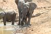 Elephant_Mwamba_Hide_Zambia0028
