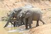 Elephant_Mwamba_Hide_Zambia0011