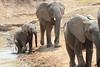 Elephant_Mwamba_Hide_Zambia0055