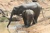 Elephant_Mwamba_Hide_Zambia0026