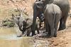 Elephant_Mwamba_Hide_Zambia0015