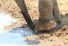 Elephant_Mwamba_Hide_Zambia0003