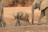Elephant_Mwamba_Kaingo_Zambia0012