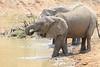 Elephant_Mwamba_Hide_Zambia0032