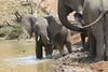 Elephant_Mwamba_Hide_Zambia0012
