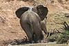 Elephant_Mwamba_Hide_Zambia0039