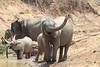 Elephant_Mwamba_Hide_Zambia0005