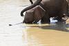 Elephant_Mwamba_Kaingo_Zambia0002