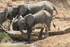 Elephant_Mwamba_Hide_Zambia0044