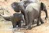 Elephant_Mwamba_Hide_Zambia0020