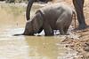 Elephant_Mwamba_Hide_Zambia0052