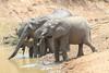 Elephant_Mwamba_Hide_Zambia0010