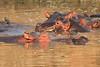 Hippo_Kaingo_Zambia0002