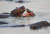 Hippo_Kaingo_Zambia0017