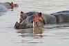 Hippo_Kaingo_Zambia0011