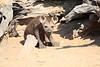 Hyena_Kaingo_Zambia__0464