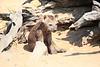 Hyena_Kaingo_Zambia__0454