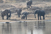Elephants_at_River_Kaingo_Zambia0020