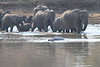 Elephants_at_River_Kaingo_Zambia0031