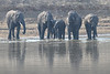 Elephants_at_River_Kaingo_Zambia0007